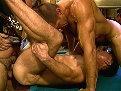 Bear threesome on the pool table